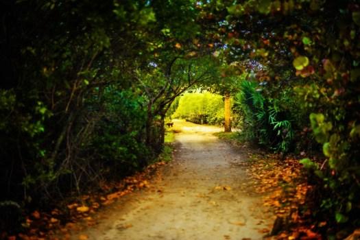 Shaded path.